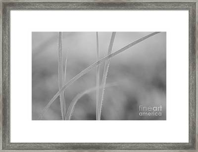 Signed By Nature 8 Framed Print by Eva Maria Nova