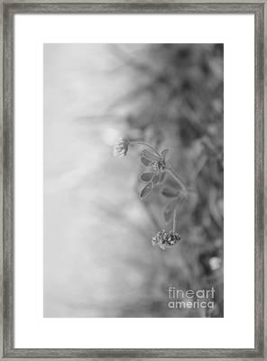 Signed By Nature 9 Framed Print by Eva Maria Nova