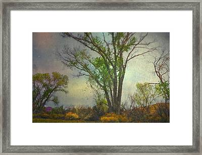 Signs  Framed Print by Mark Ross