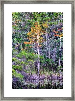 Signs Of Fall In Florida Framed Print by JC Findley