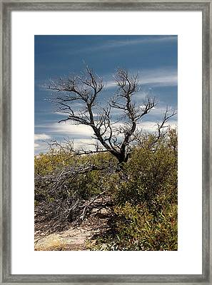 Framed Print featuring the photograph Signs Of Life After The Fire by Joe Kozlowski