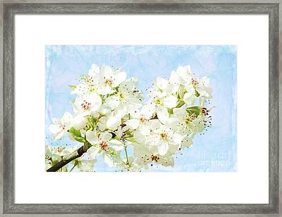 Signs Of Spring Framed Print by Inspirational Photo Creations Audrey Woods