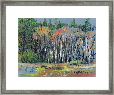 Signs Of Spring Framed Print by Donald Maier