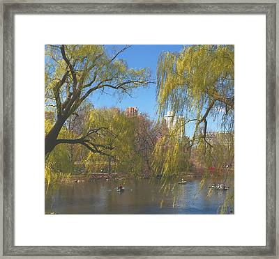 Signs Of Spring In Central Park 4 Framed Print by Muriel Levison Goodwin