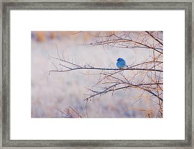 Signs Of Spring Framed Print by John De Bord