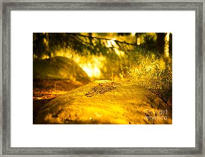 Silence And Peace Under The Spruce Trees Framed Print