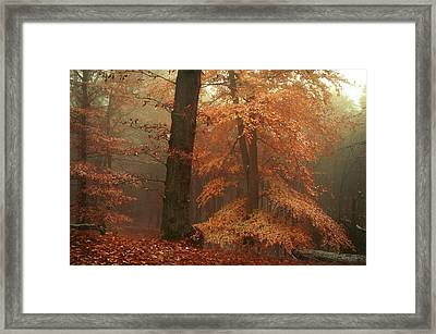 Silence In Misty Woods Framed Print