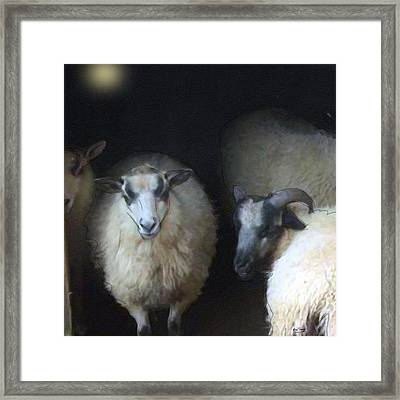 Silence Of The Sheep Framed Print