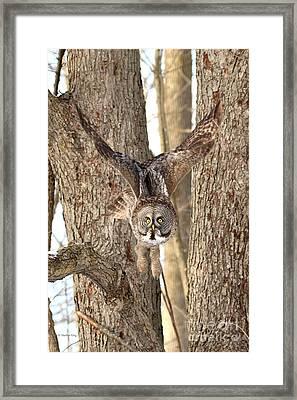 Silent Hunter Framed Print by Heather King