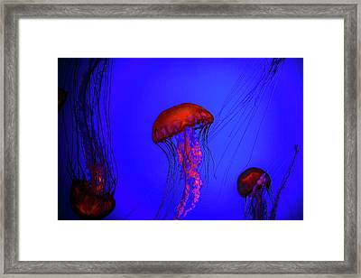Framed Print featuring the photograph Silent Jellies by Jeff Folger