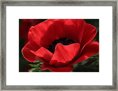 Silent Ovation  Framed Print