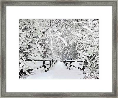 Silent Path In The Snow Framed Print