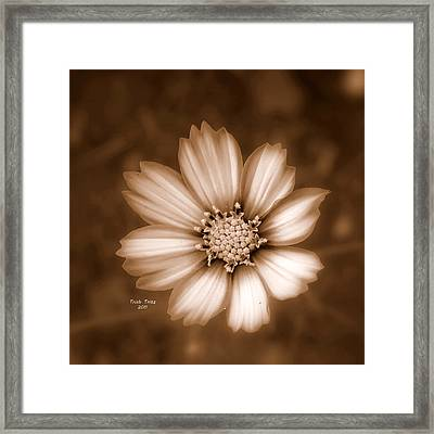 Silent Petals Framed Print by Trish Tritz