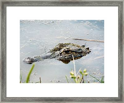 Silent Predator Framed Print by Audrey Van Tassell