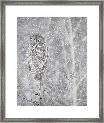 Silent Snowfall Portrait Framed Print by Everet Regal
