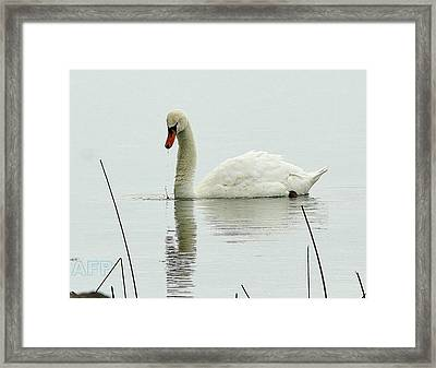 Framed Print featuring the photograph Silent Water by Al Fritz