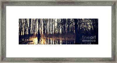 Silent Woods No 4 Framed Print