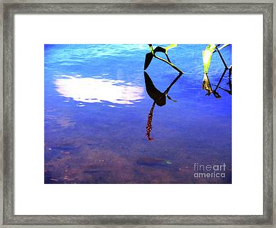 Silhouette Aquatic Fish Framed Print