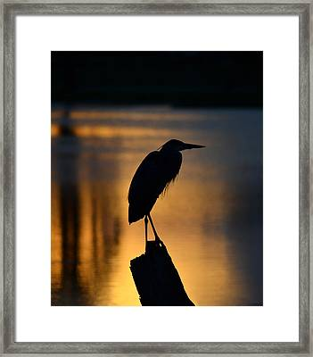Silhouette At Sunset Great Blue Heron Framed Print
