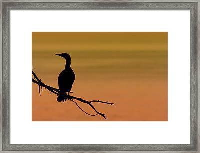 Silhouette Cormorant Framed Print