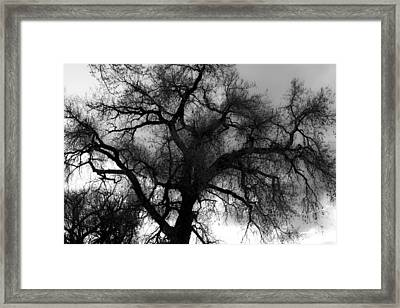 Silhouette Framed Print by James BO  Insogna