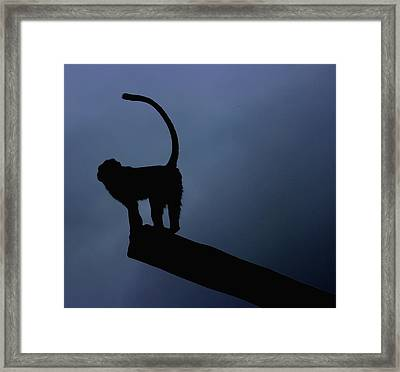 Silhouette Framed Print by Martin Newman