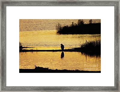 Framed Print featuring the photograph Silhouette Of A Grey Or Gray Heron - Ardea Cinerea - In Wetland We by Paul Farnfield