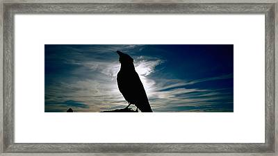 Silhouette Of A Raven At Dusk Framed Print by Panoramic Images