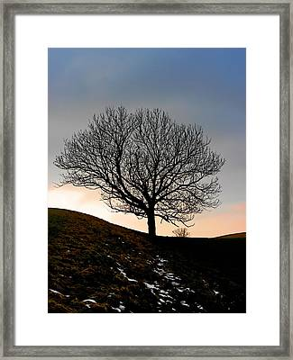Silhouette Of A Tree On A Winter Day Framed Print