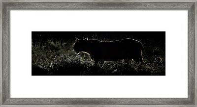 Silhouette Of African Lion Panthera Framed Print by Panoramic Images