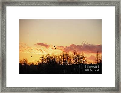 Silhouette Of Birds Wildfowl Geese Flying Off To Roost At Sunset Framed Print