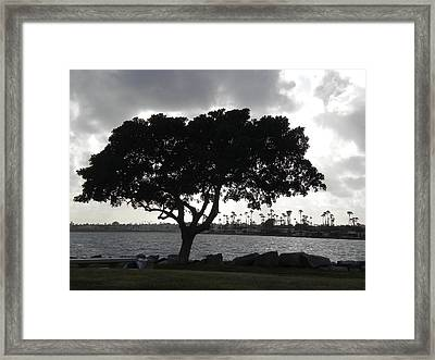 Silhouette Of Tree Framed Print