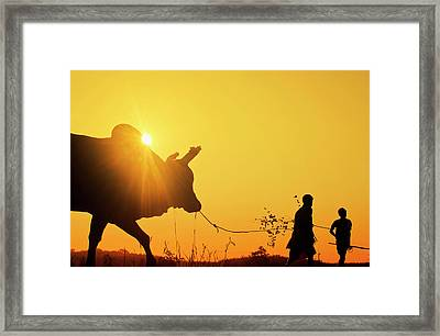 Silhouette Of Two Young Boys With A Bull At Sunrise In The Countryside Of Trang, Thailand Framed Print