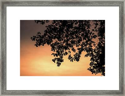 Silhouette Tree In The Dawn Sky Framed Print