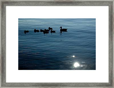 Silhouetted Duck Family Swims Framed Print by Todd Gipstein