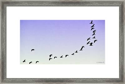 Silhouetted Flight Framed Print