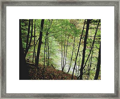Silhouetted Trees Framed Print by Linda Carruth