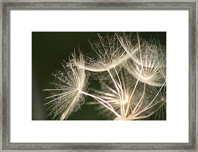 Framed Print featuring the photograph Silken Seed Parachutes by Peg Toliver
