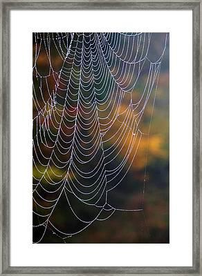 Silken Threads Framed Print