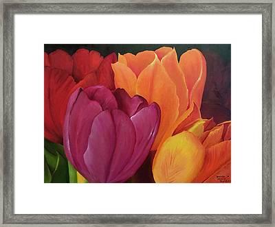 Silky Tulips Unite  Framed Print