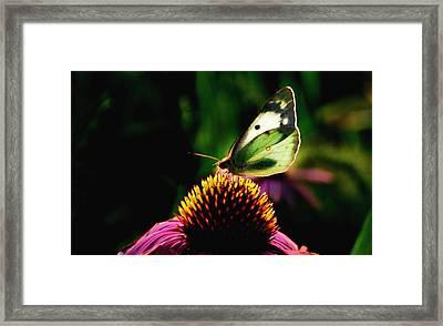 Silky Wings Framed Print
