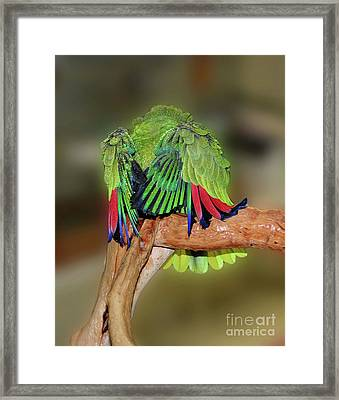 Silly Amazon Parrot Framed Print