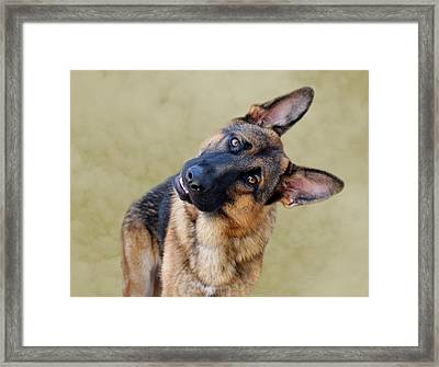 Silly Boy Framed Print by Sandy Keeton