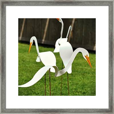 Silly Goose Framed Print by JAMART Photography
