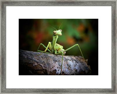 Silly Mantis Framed Print by Karen Scovill