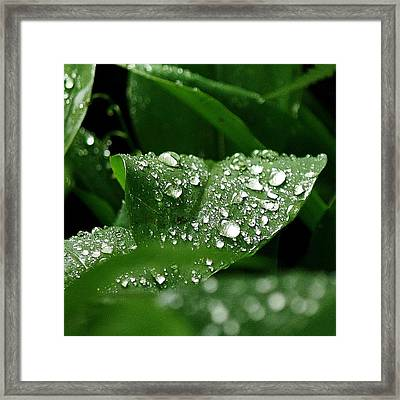 Framed Print featuring the photograph Silver Drops Of Spring by Al Fritz
