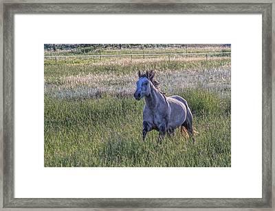 Silver Dun Framed Print