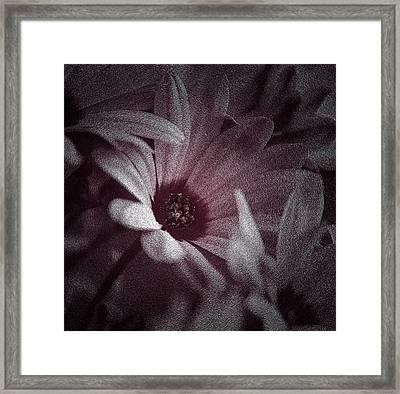 Silver Dust Framed Print