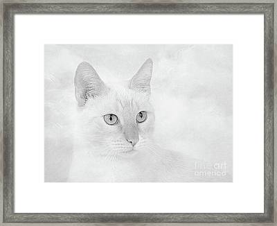 Silver Flame Point Siamese Framed Print