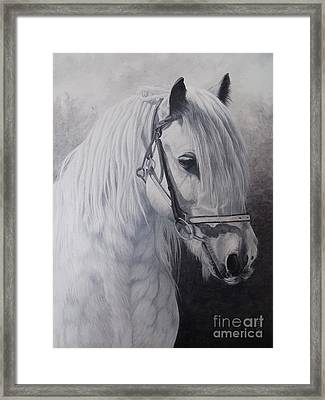 Silver-gypsy Cob Framed Print by Pauline Sharp